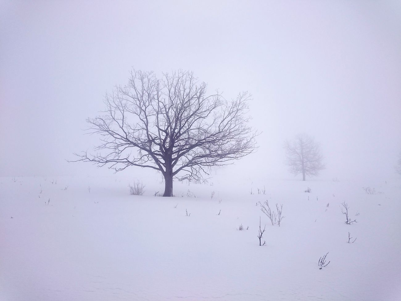 Bare Tree Nature Snow Tree No People Cold Temperature Day Winter Snowing Beauty In Nature Close-up Outdoors зима туман лес и природа дуб