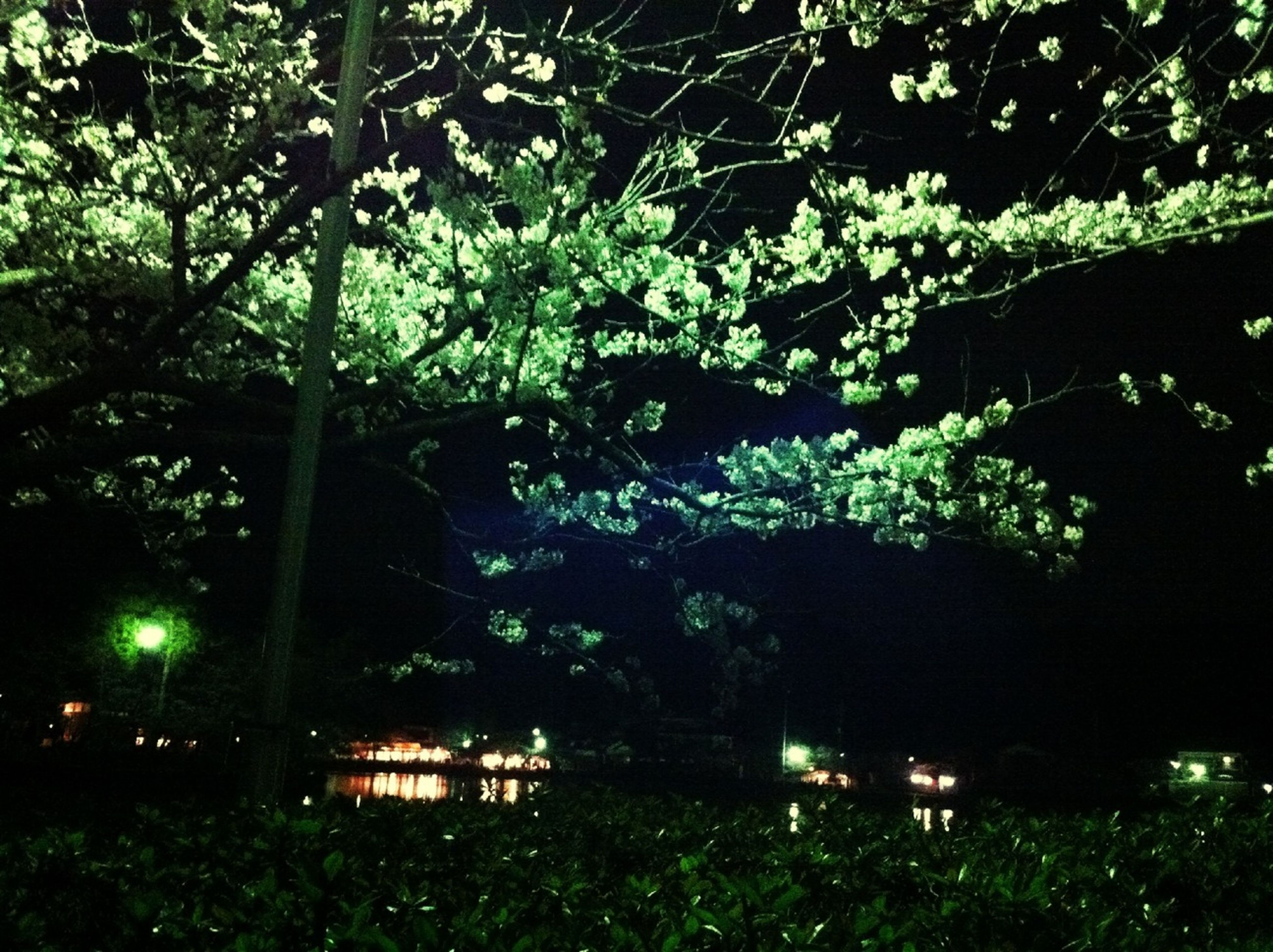 tree, growth, branch, green color, night, nature, tranquility, illuminated, plant, park - man made space, silhouette, outdoors, leaf, beauty in nature, lush foliage, grass, tree trunk, no people, tranquil scene, lighting equipment