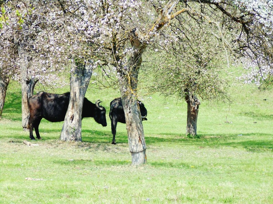 Hanging Out Taking Photos Spring Flowers Trees Bivaly