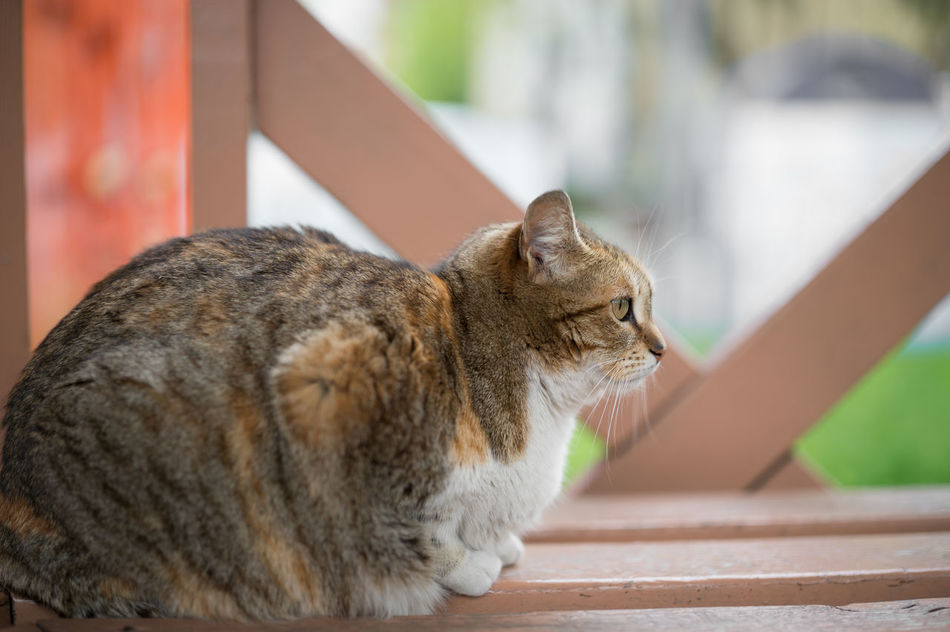 Fat Stray Cat Chilling... Animal Themes Cat Cats Cats Of Istanbul Cat♡ Close-up Domestic Animals Fat Feline Focus On Foreground Mammal Nature No People Obese Obese Cat Obesity One Animal Outdoors Sitting Stray Animal Stray Cat