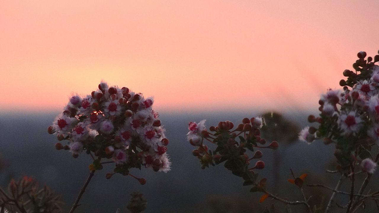 Australia's sunsets Sunset Silhouettes Sunset_collection Flower Flower Collection Australian Outback Travel Australia Outdoors Showcase: November