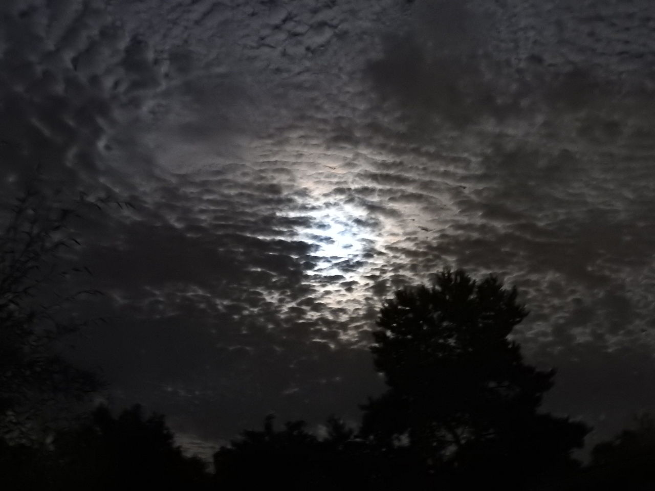 sky, nature, low angle view, beauty in nature, scenics, no people, cloud - sky, tranquility, outdoors, silhouette, tranquil scene, moon, night, tree, sunset, astronomy, space, close-up