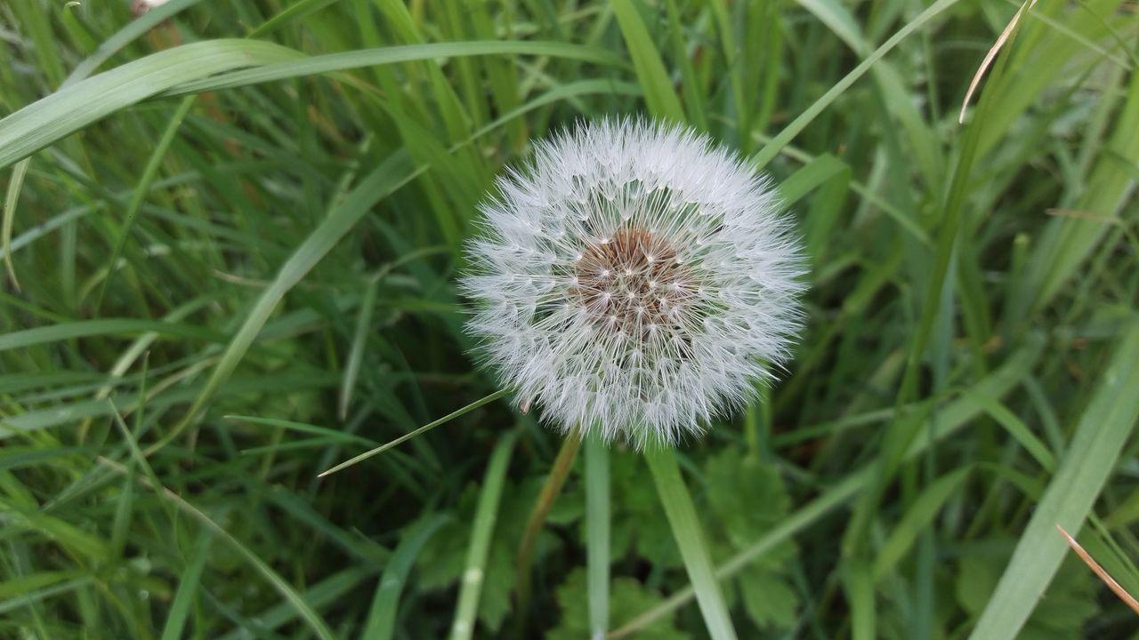 Nature Flower Growth Close-up Grass Plant Outdoors Beauty In Nature Day No People Field Uncultivated Fragility Flower Head Closing Rural Scene Freshness Thistle Dandelion Collection Dandelion Close-up Dandelions
