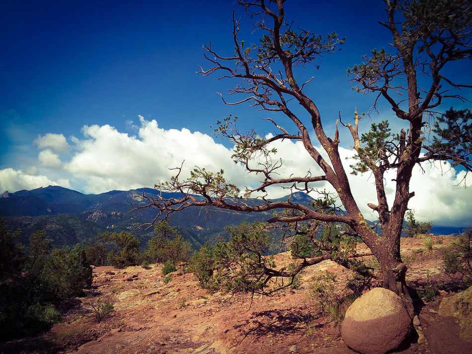 Tree with rocks at Garden of the Gods, Colorado Hugging A Tree Rocks Nature Tree Trees Tree_collection  Beautiful Day Colorado Garden Of The Gods Color Scenic Scenic Photograghy Scenic Landscapes Beauty In Nature Nature_perfection Taking Photos Enjoying The View Rock Formation Cloud Scenics Clouds & Sky Scenery Scenery_collection Taking Pictures Scenic Lookout