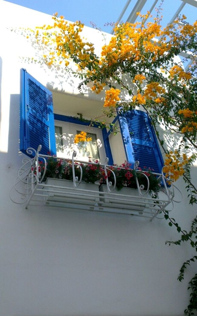 Windows Blue Window