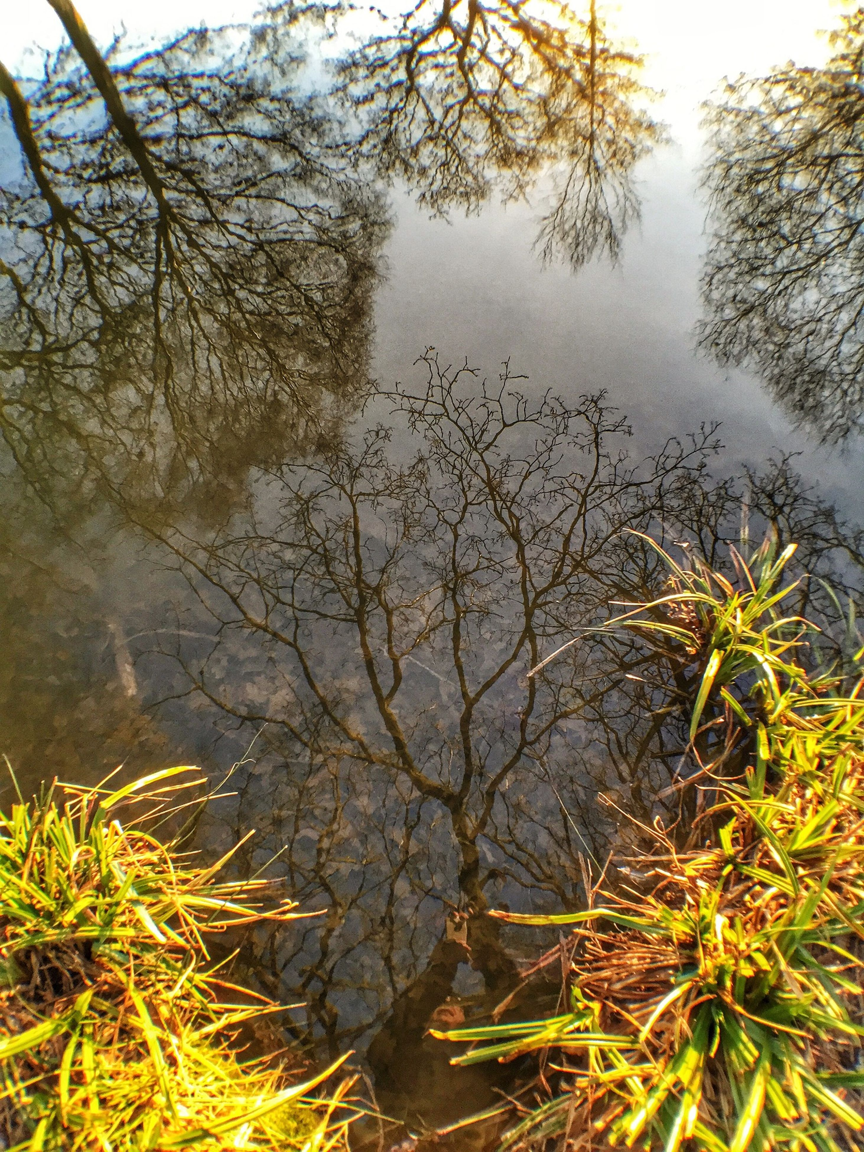 water, tranquility, lake, branch, tree, tranquil scene, nature, growth, reflection, plant, beauty in nature, scenics, grass, bare tree, lakeshore, sky, leaf, day, outdoors, idyllic