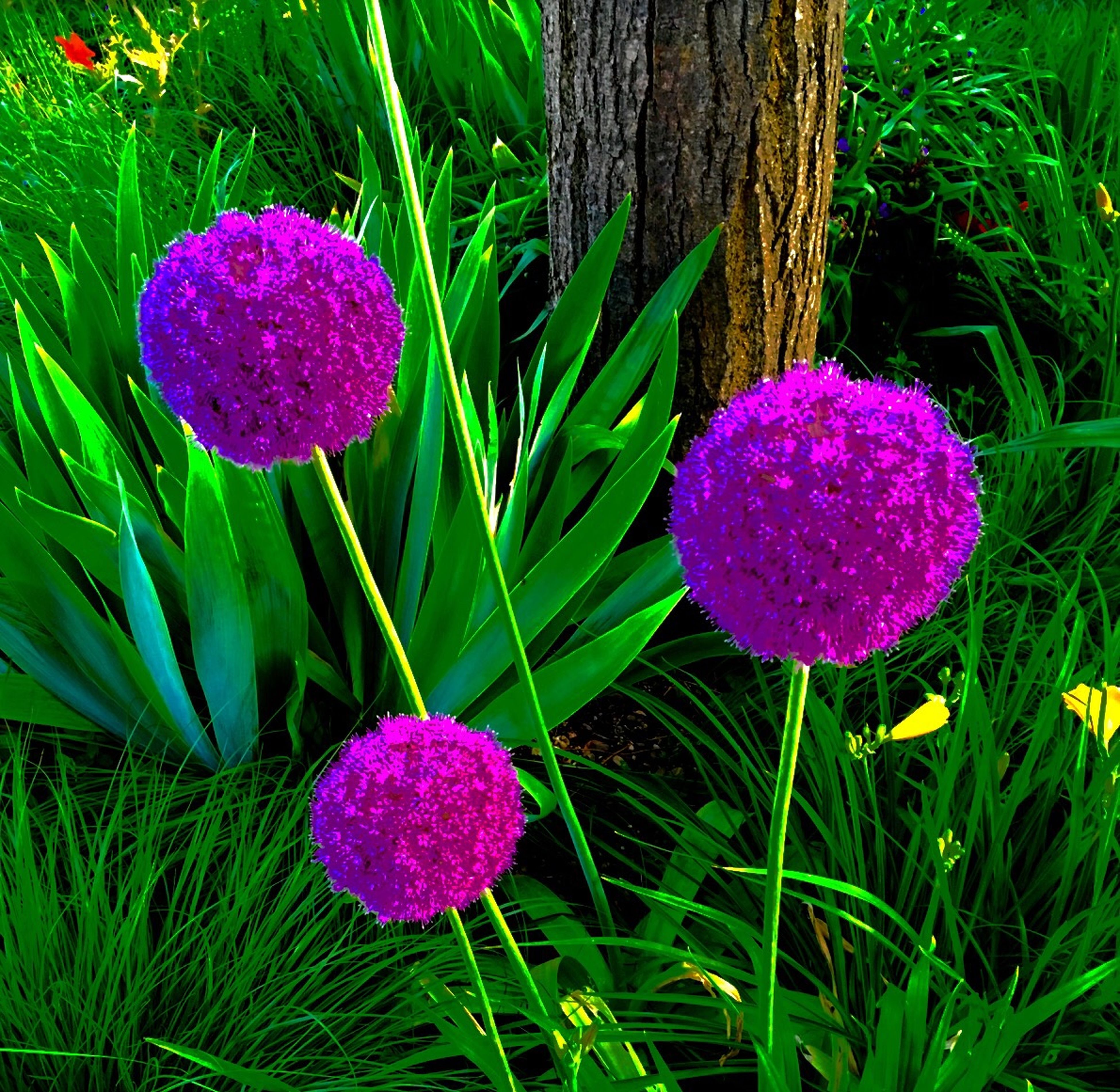 flower, growth, freshness, fragility, beauty in nature, purple, pink color, nature, petal, plant, flower head, close-up, field, blooming, in bloom, grass, green color, springtime, focus on foreground, blossom