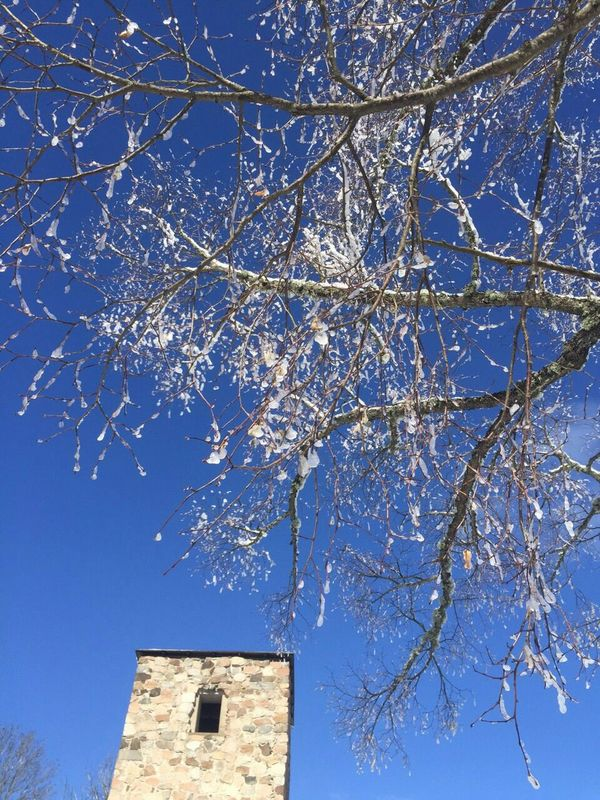 Hugging A Tree Tower Monestary Roadtrip EyeEm 2015 Enjoying Life
