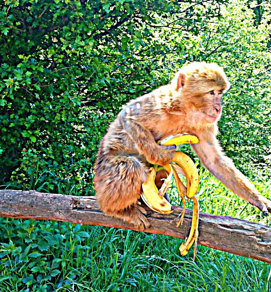 Animals Monkey