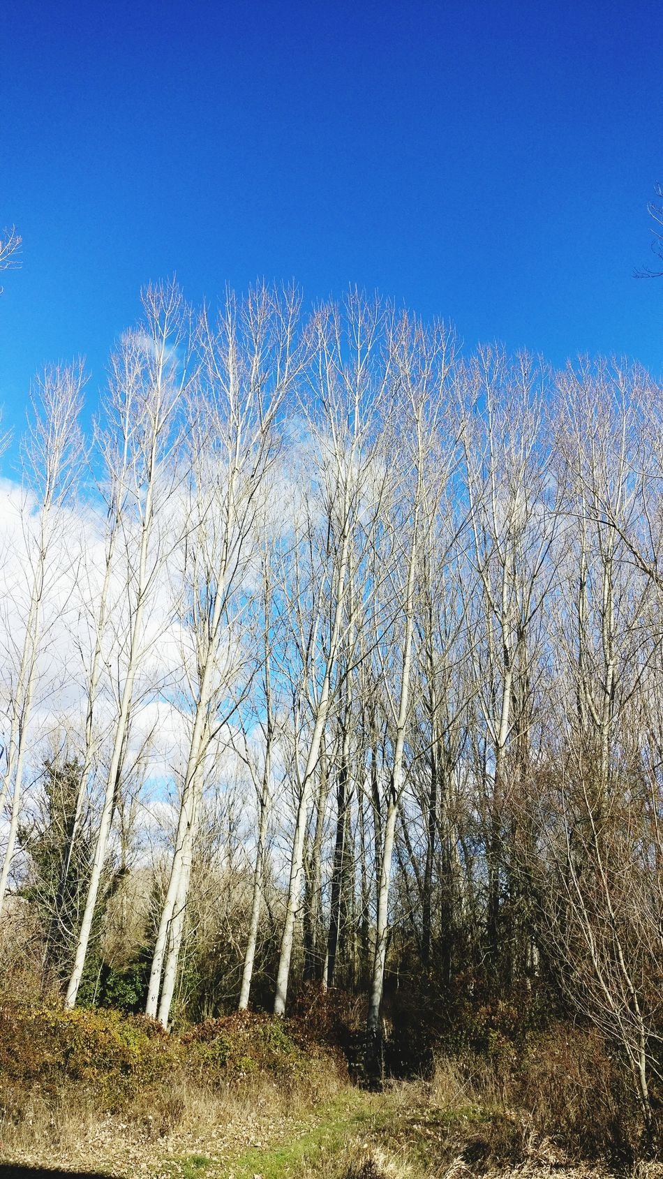 Un pequeño bosque Nature Sky No People Outdoors LeonEsp
