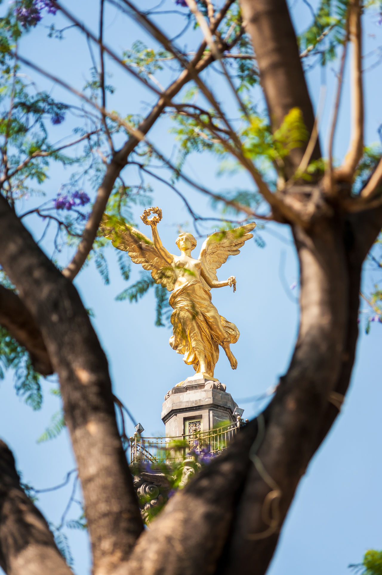 Angel of Independence monument in Mexico City framed by a tree Angel Branch City Df Distrito Downtown Federal Gold Colored Icon Independence Landmark Latin Mexico Mexicocity  Monument Old Outdoors Paseo Reforma Sculpture Square Statue Symbol Tree Urban