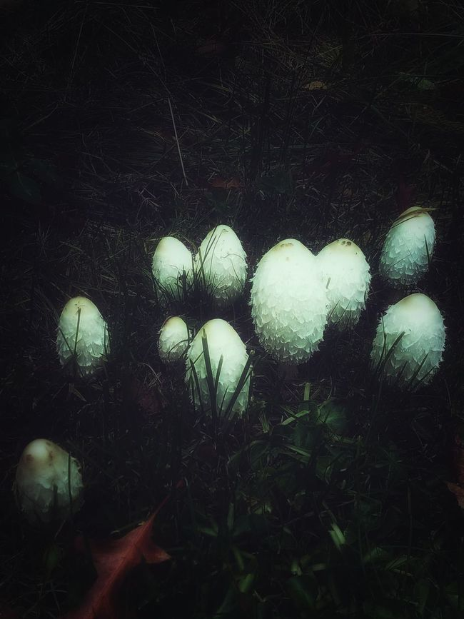 Spooky mushrooms..they look like dragon eggs! 🤔😁 Nature Beauty In Nature Close-up Outdoors Atmospheric Mood Artistic Check This Out Hello World EyeEm Gallery Popular Photos EyeEm Best Shots Photography Edited By @minimeme.art Fantasy Edits Mushrooms Autumn