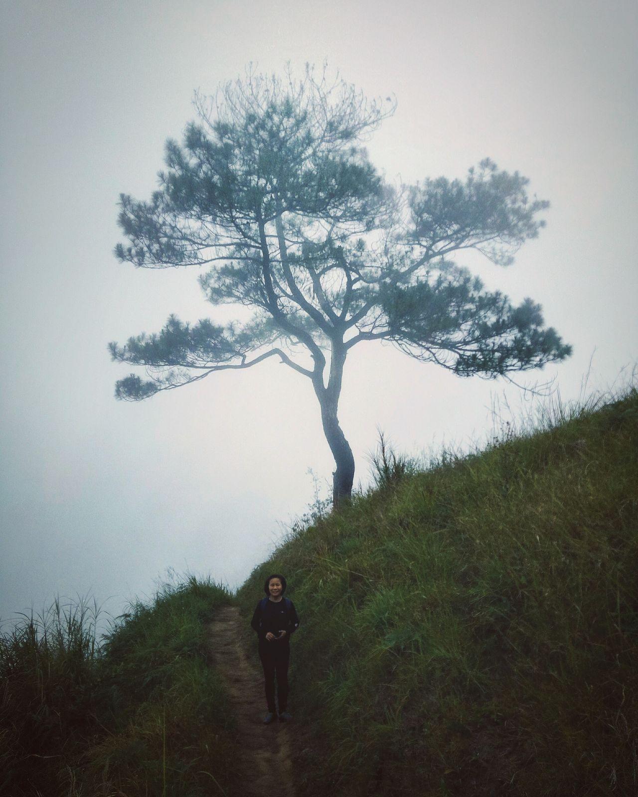 Tree Nature Fog Philippines Benguet Itogon Baguio Mount Ulap Commune First Eyeem Photo