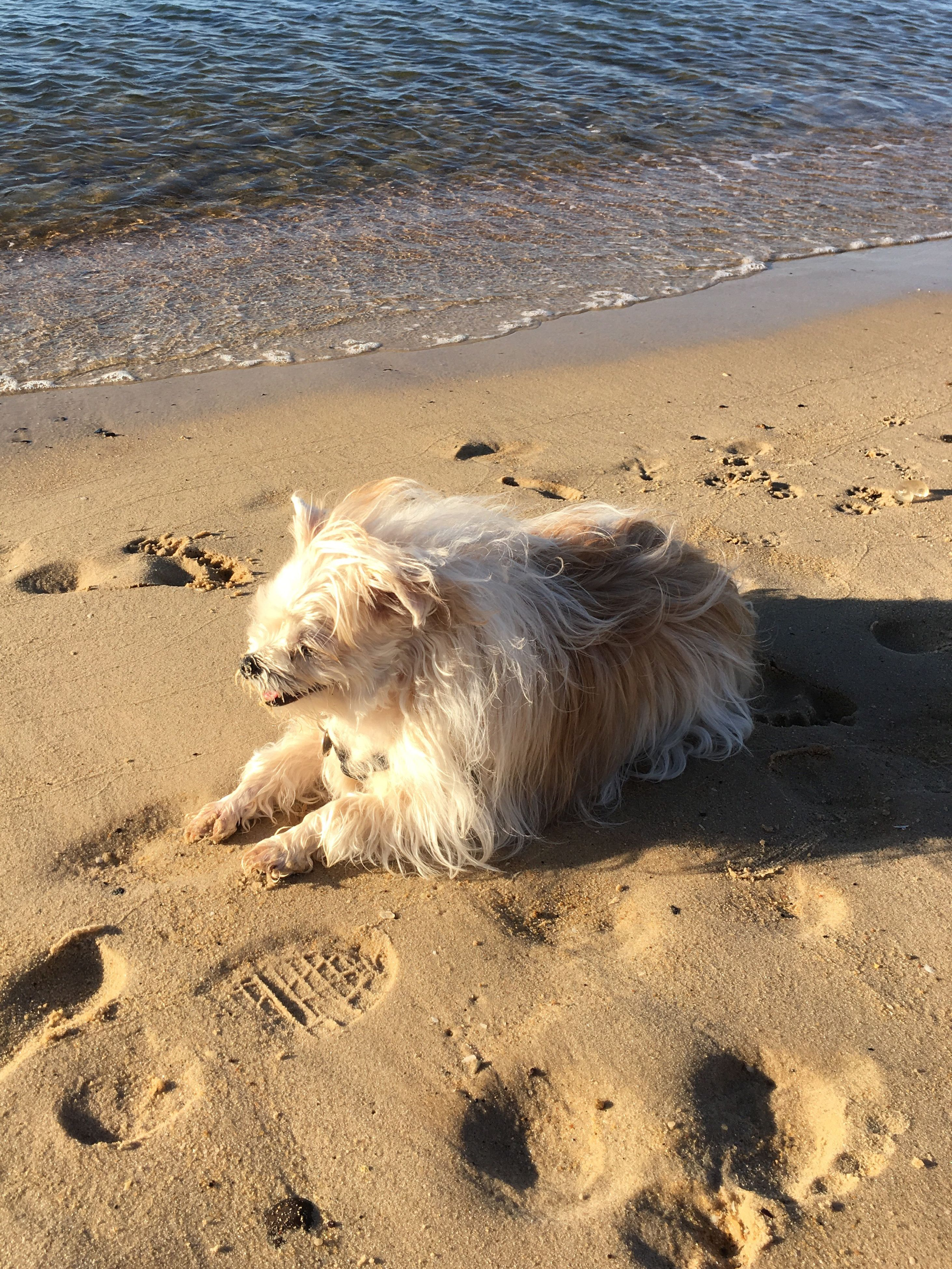 beach, sand, shore, sea, animal themes, water, nature, one animal, animals in the wild, sunlight, wave, tranquility, surf, footprint, sandy, wildlife, day, beauty in nature, horizon over water, outdoors