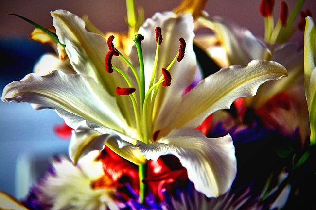 White Lilly Taking Photos Relaxing Flower Collection Flowers Nature
