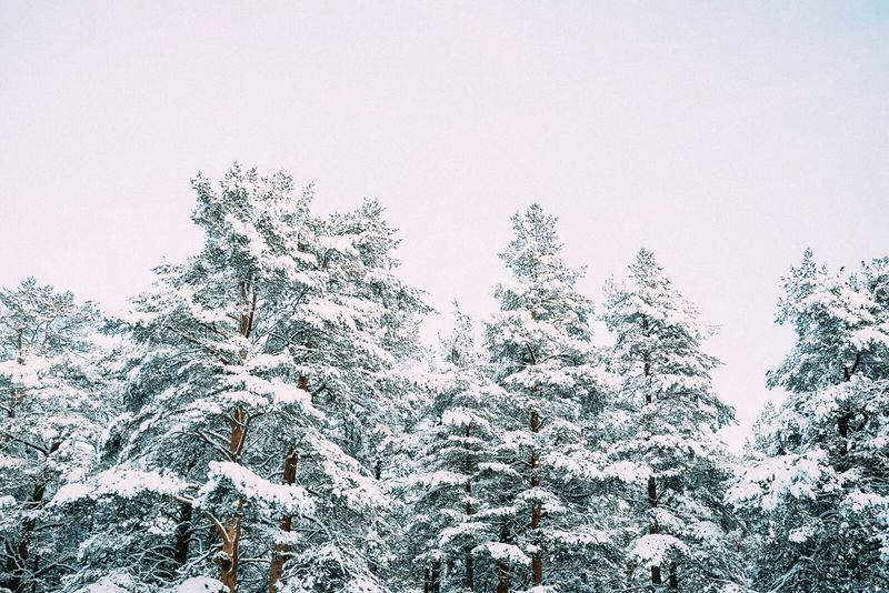 The Winter seems finally stay. Eye Em Nature Lover Snow