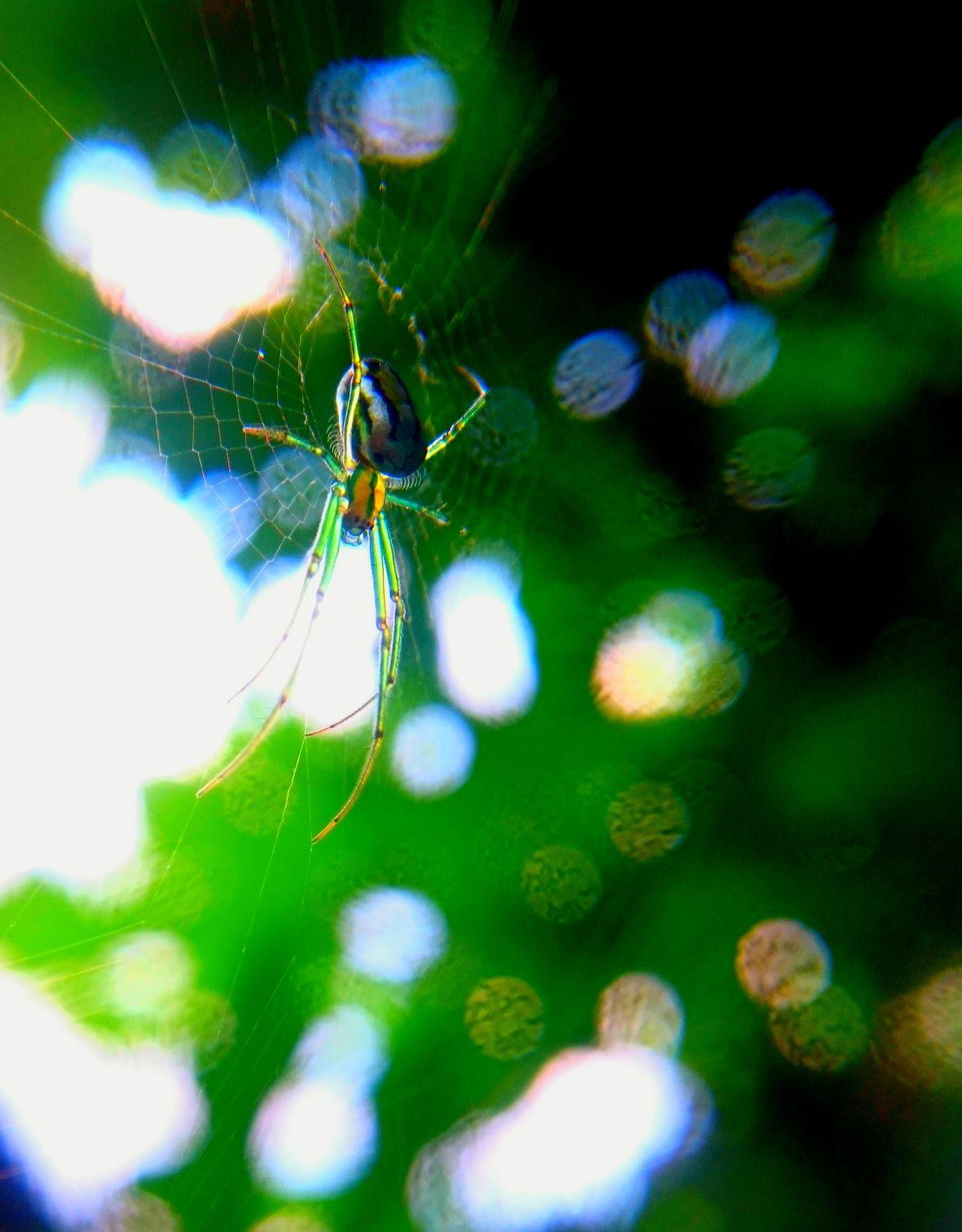 Itsy-Bitsy Spider Spiderweb EyeEm Best Shots Mobilephotography Macrophotography Arachnophobia Macro Green Greenspider Spiders Spidersweb Maximum Closeness