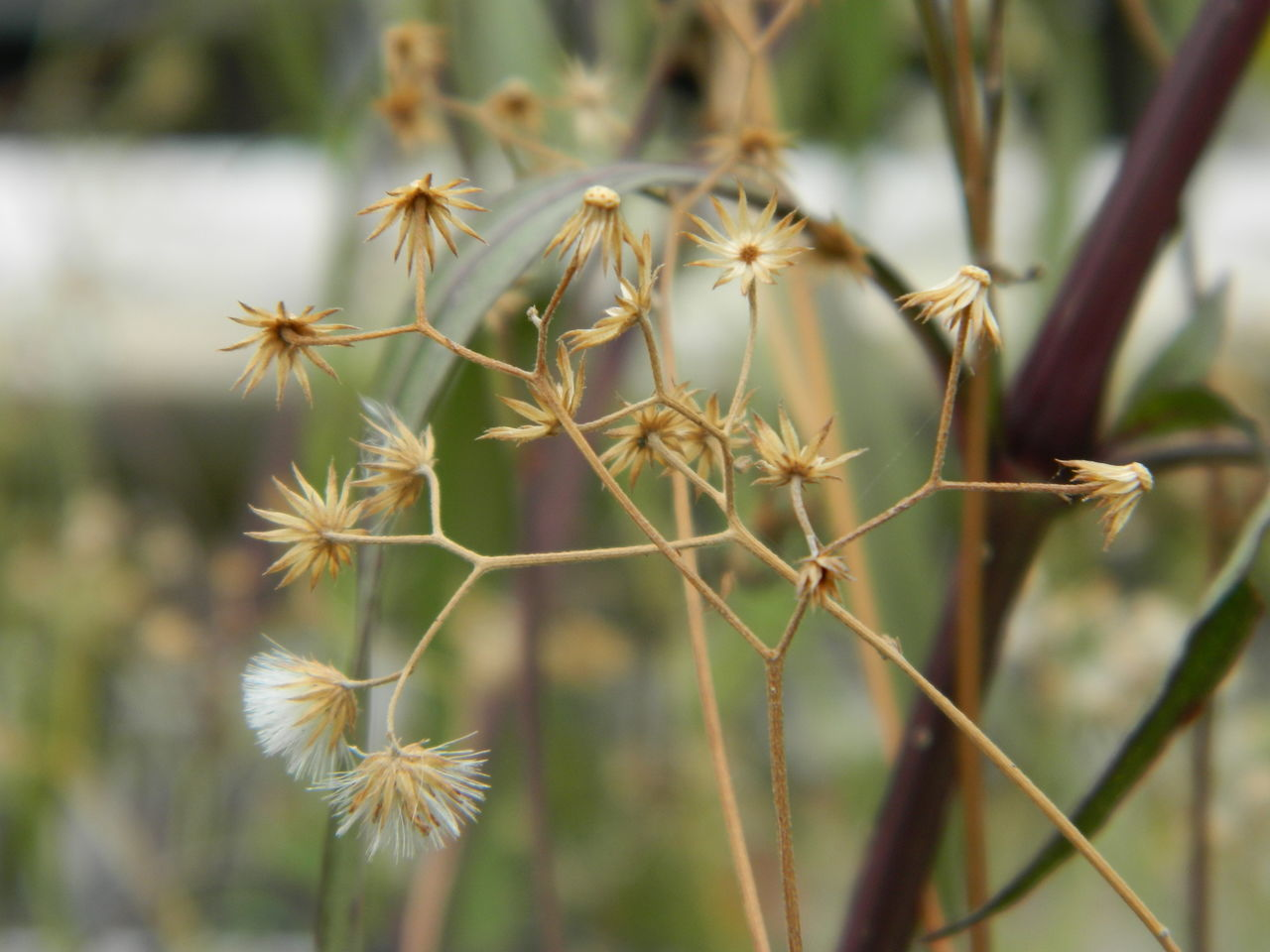 Beauty In Nature Close-up Day Focus On Foreground Fragility Growth Nature No People Outdoors Plant Spiky Wilted Plant