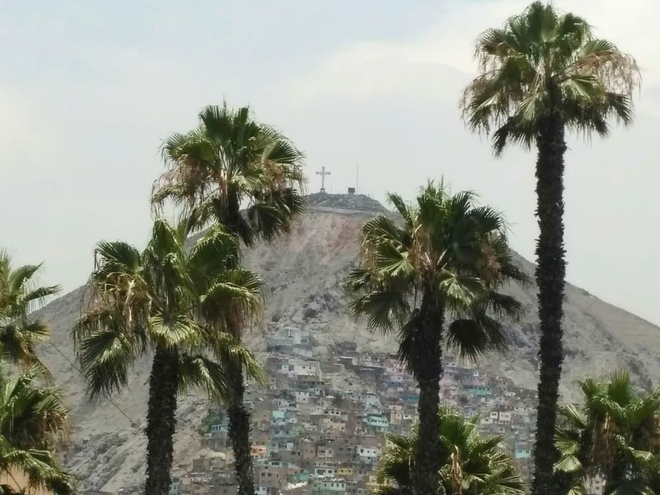 poor believers Palm Tree Cross Favela