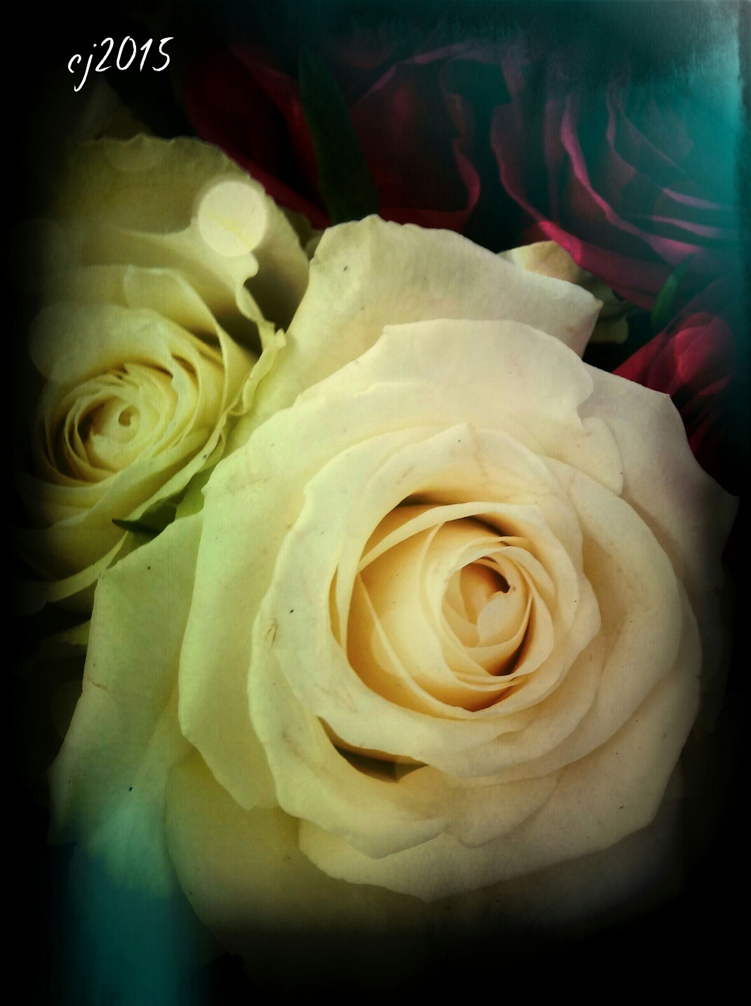 flower, petal, rose - flower, flower head, freshness, fragility, beauty in nature, close-up, rose, transfer print, single flower, nature, growth, auto post production filter, blooming, white color, indoors, softness, single rose, in bloom