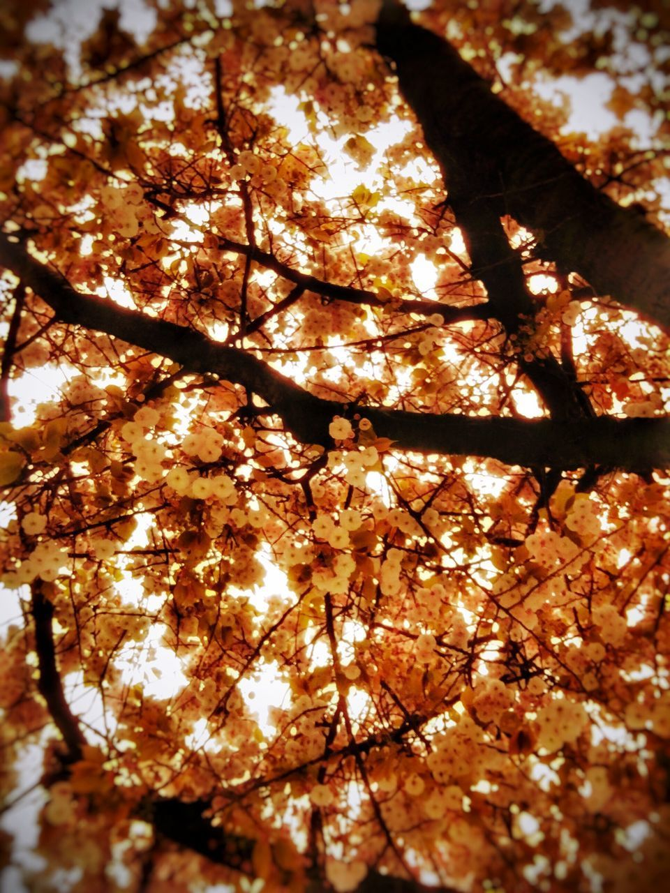 autumn, change, season, tree, orange color, nature, branch, leaf, close-up, low angle view, beauty in nature, sunlight, growth, outdoors, focus on foreground, full frame, backgrounds, leaves, day, maple leaf