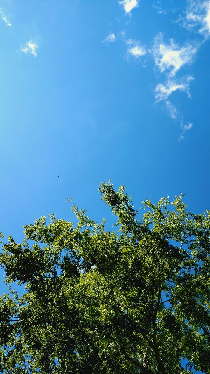 nature, low angle view, day, tree, blue, sunny, green, forest, blue sky, sunshine, beauty in nature, no people, growth, sky, outdoors, clear sky