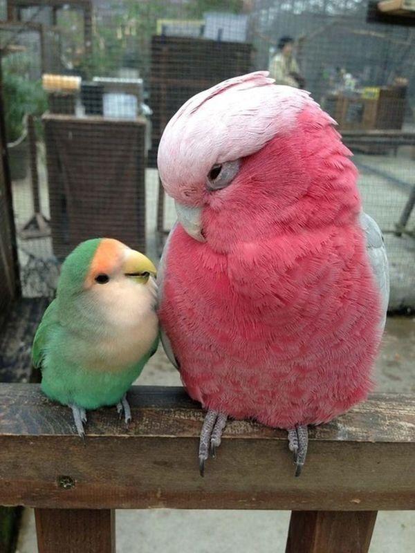 Buenos dias tortolitos :3 Good Morning Hi! Birds