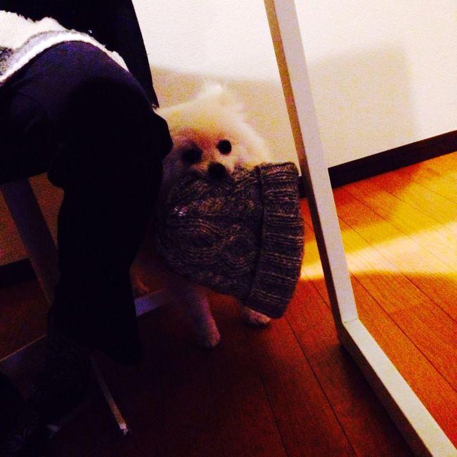 Dog I Love My Dog Korosuke