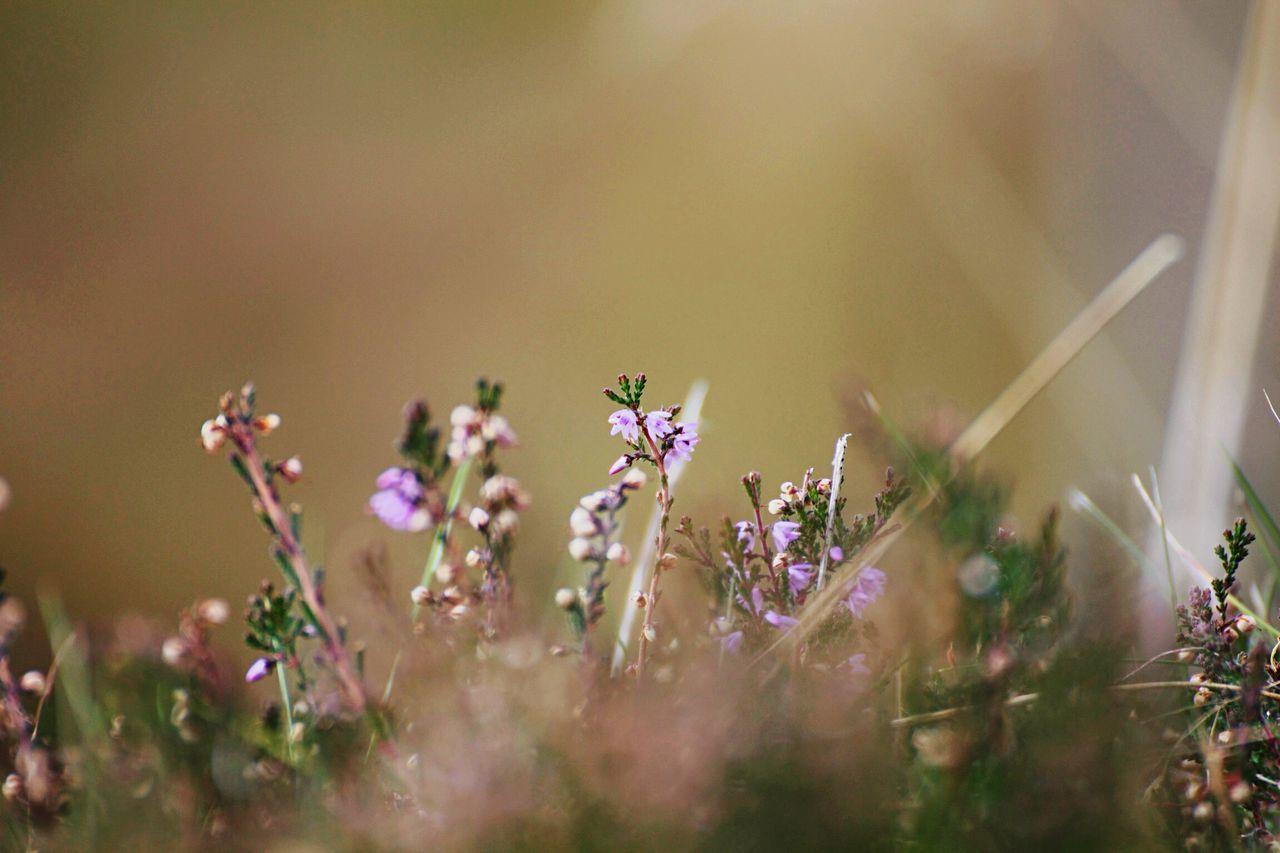 Soft feelings Sweden Grass Nature Open Edit
