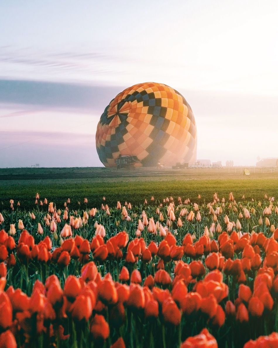 Sunrise surprise. Nature Field Landscape Sky Beauty In Nature Growth Plant Agriculture No People Flower Outdoors Scenics Cloud - Sky Tranquility Rural Scene Day Hot Air Balloon Fragility Tree Freshness