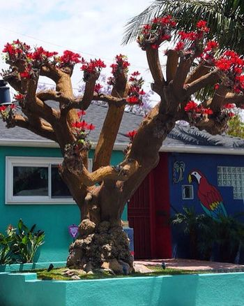 Malibu beautiful nature Redflowes Love Malibu Love Trees Beauty In Nature RedFlowers😍 Tree Day No People Nature Outdoors Architecture