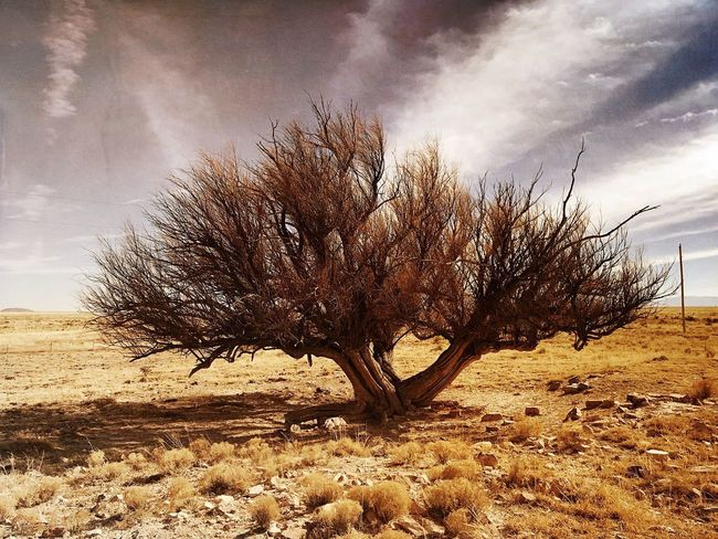 """""""Mystery Ranch No. 9"""" Clinging to life. New Mexico Skies New Mexico Photography New Mexico Landscape Dying Tree Lone Bare Tree Landscape Tree Isolated Solitude Remote Nature"""