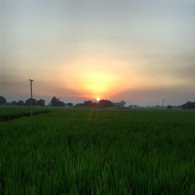 Punjab Pind Farms Sunset