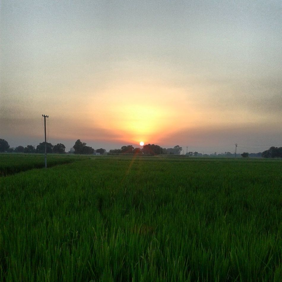 Punjab Pind Farms Sunset