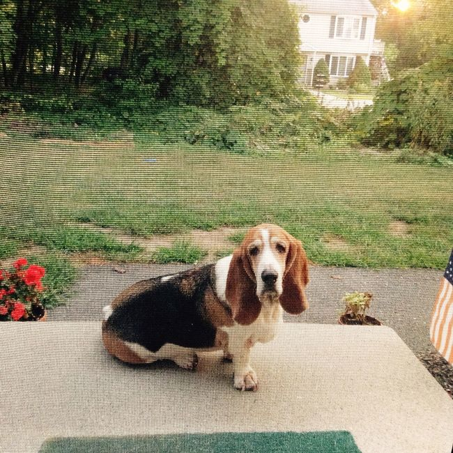 Elwood hangs out on the porch. Morningcoffee