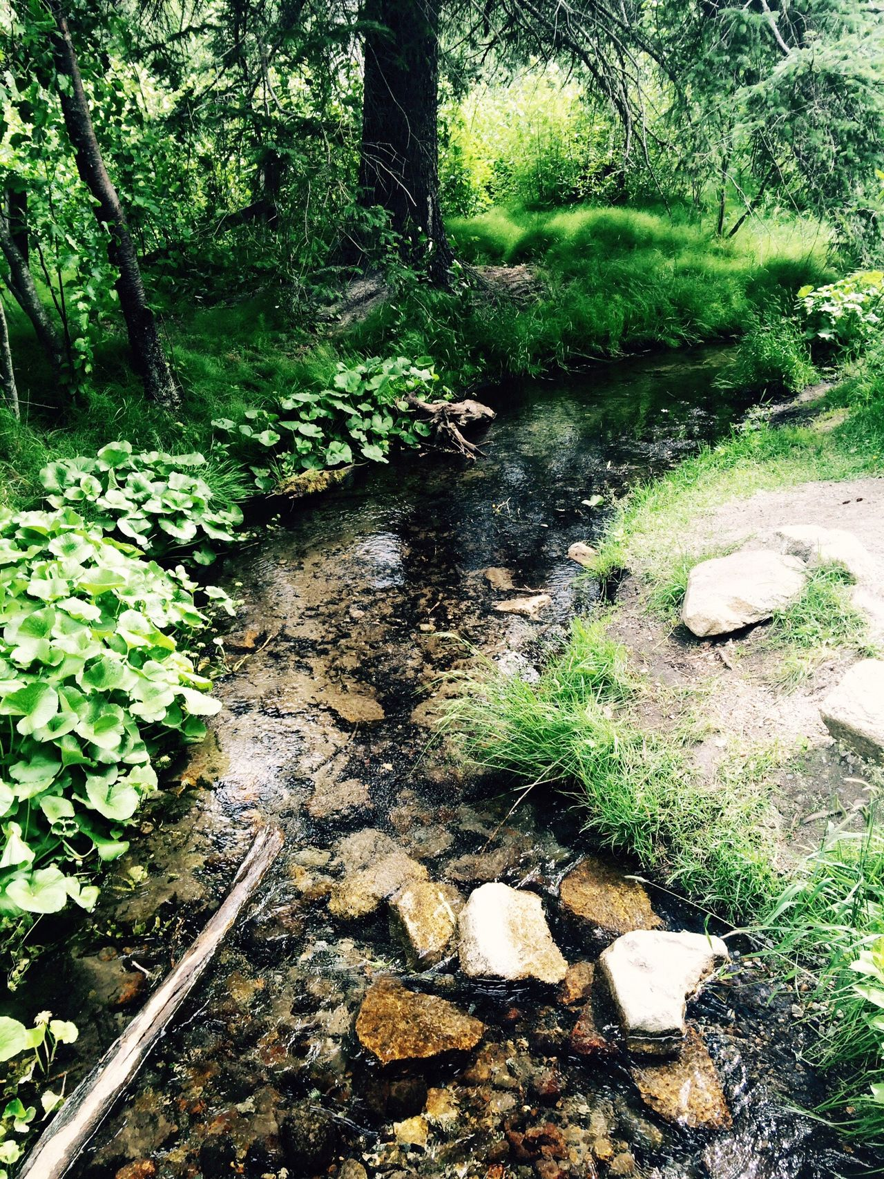 Calming Streams Nature Forest Tranquility
