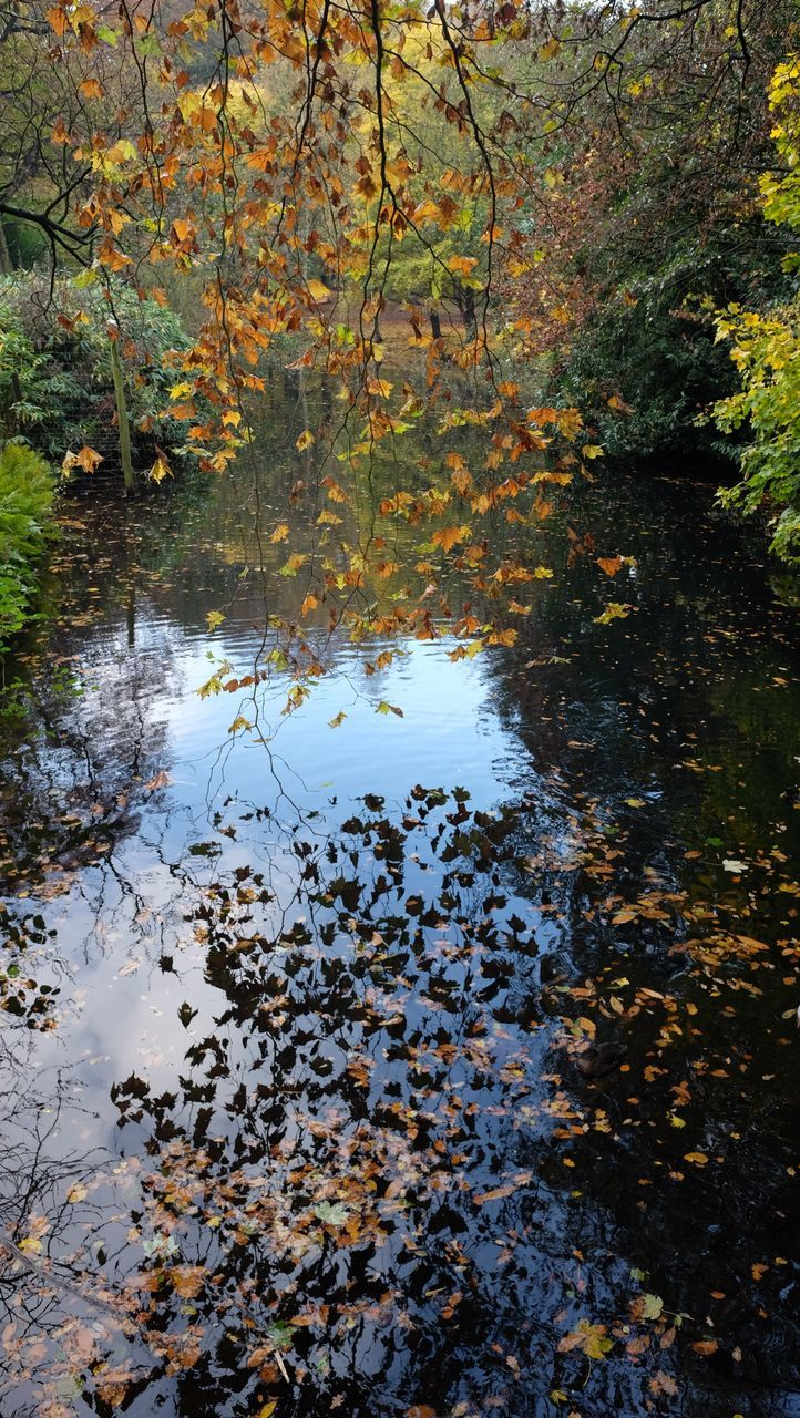nature, autumn, tree, water, tranquility, leaf, beauty in nature, lake, reflection, growth, tranquil scene, day, forest, no people, change, outdoors, scenics