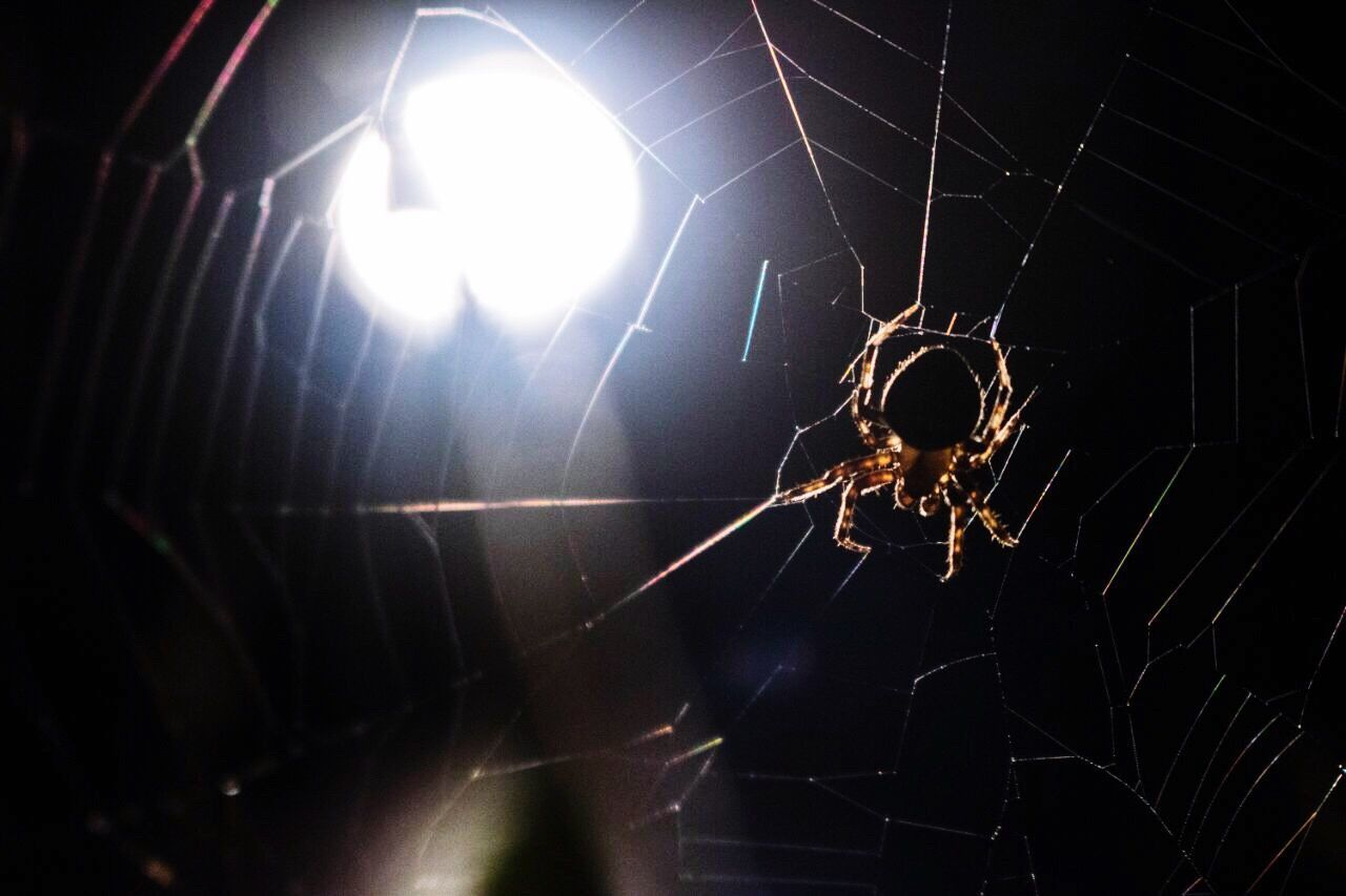 spider web, spider, one animal, web, close-up, survival, animal themes, no people, animals in the wild, animal leg, outdoors, nature, fragility, day