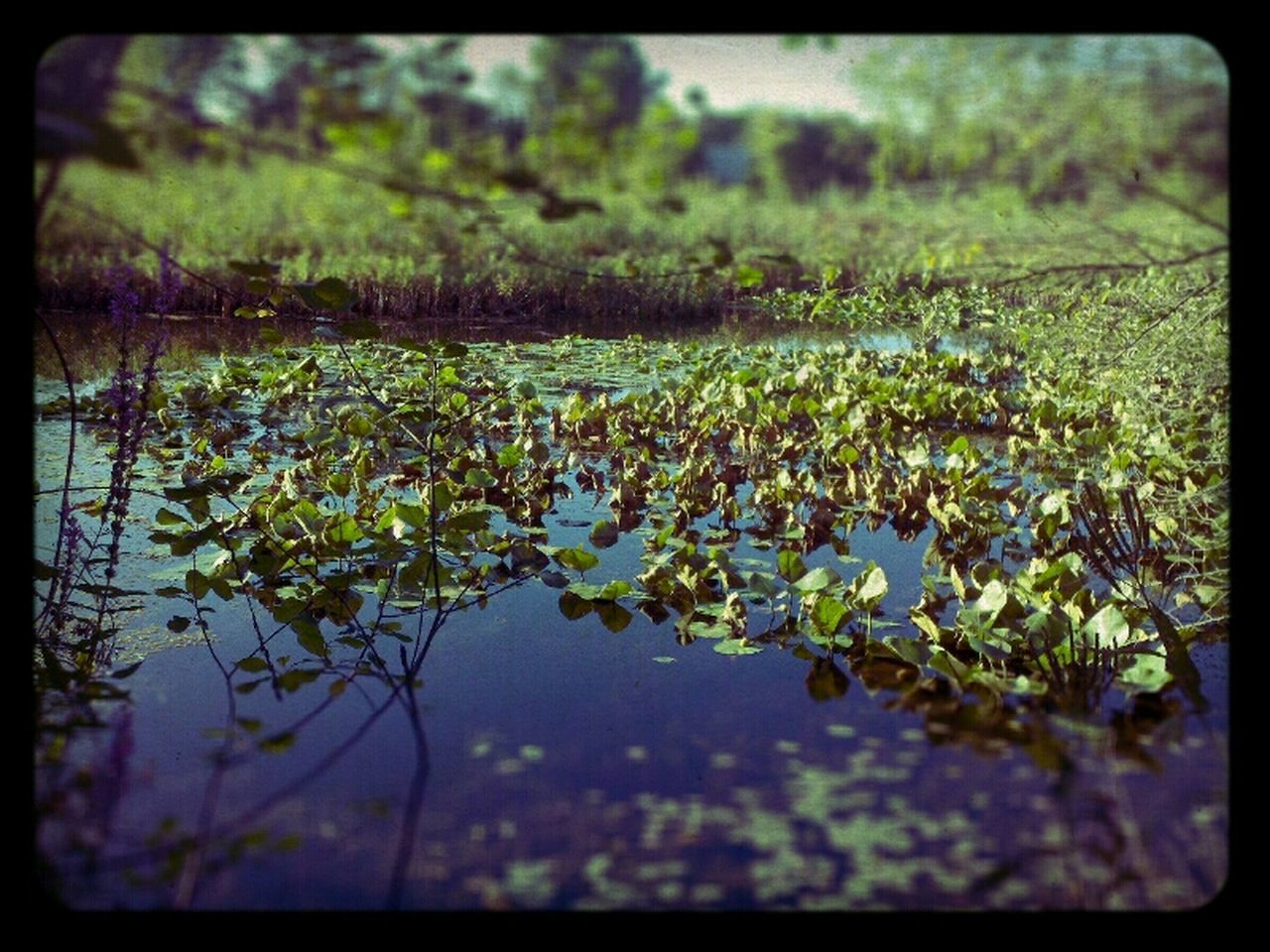 Nature Pond EyeEm Nature Lover