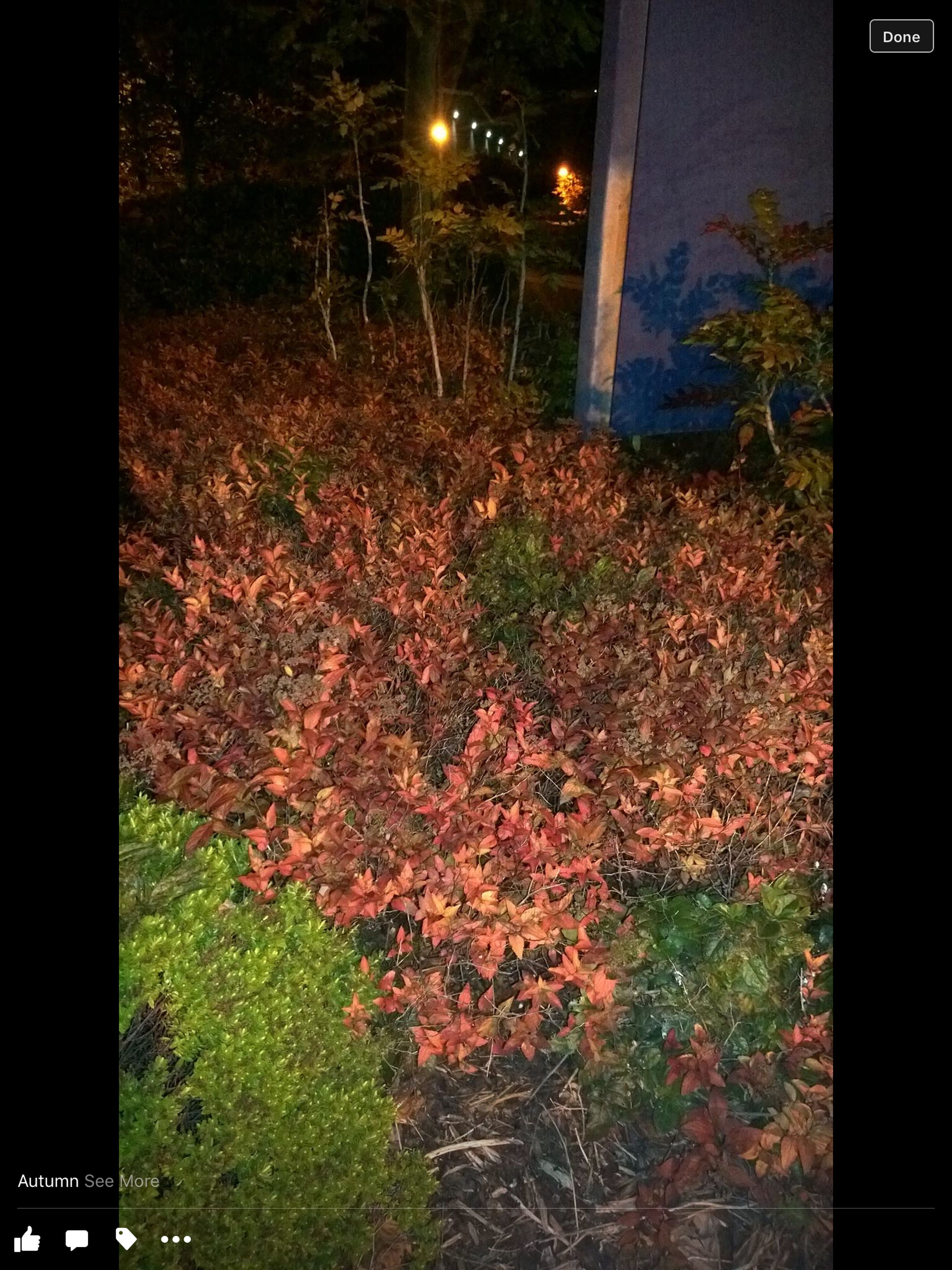 night, illuminated, tree, plant, growth, street light, lighting equipment, dark, no people, house, nature, outdoors, front or back yard, built structure, grass, auto post production filter, tranquility, light - natural phenomenon, building exterior, leaf