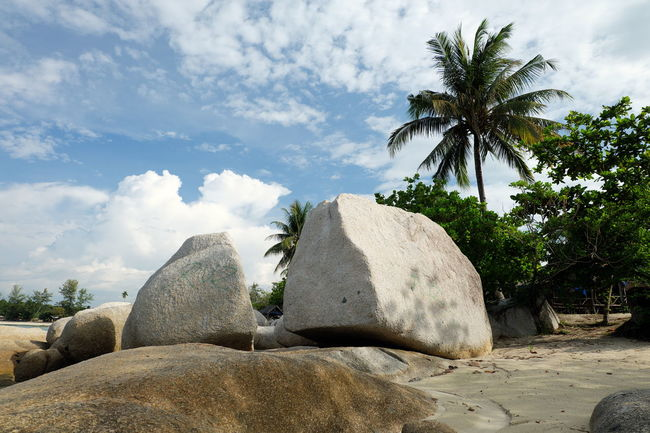 Beauty In Nature Cloud Coconut Palm Tree Countryside Day Growth Nature No People Non-urban Scene Outdoors Palm Tree Remote Rock - Object Rocky Scenics Sea Shore Sky Solitude Summer Surface Level Tall - High Tranquil Scene Tranquility Tree