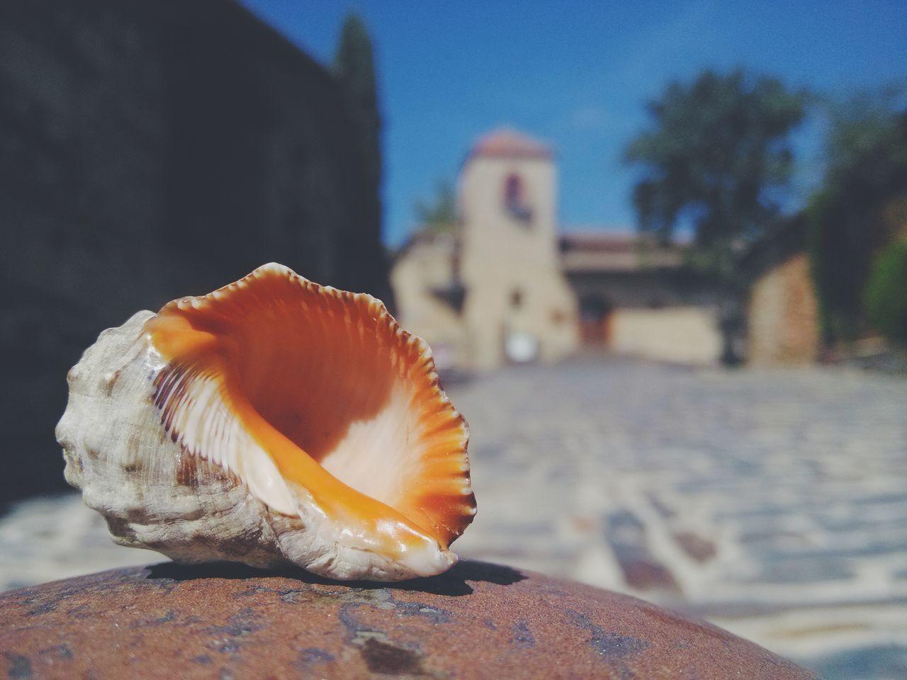 La caracola viajera vuelve al camino. Patones de Arriba, Madrid Caracolaviajera Eyeen Best Shots AMPt - My Perspective Dreams And Seashells