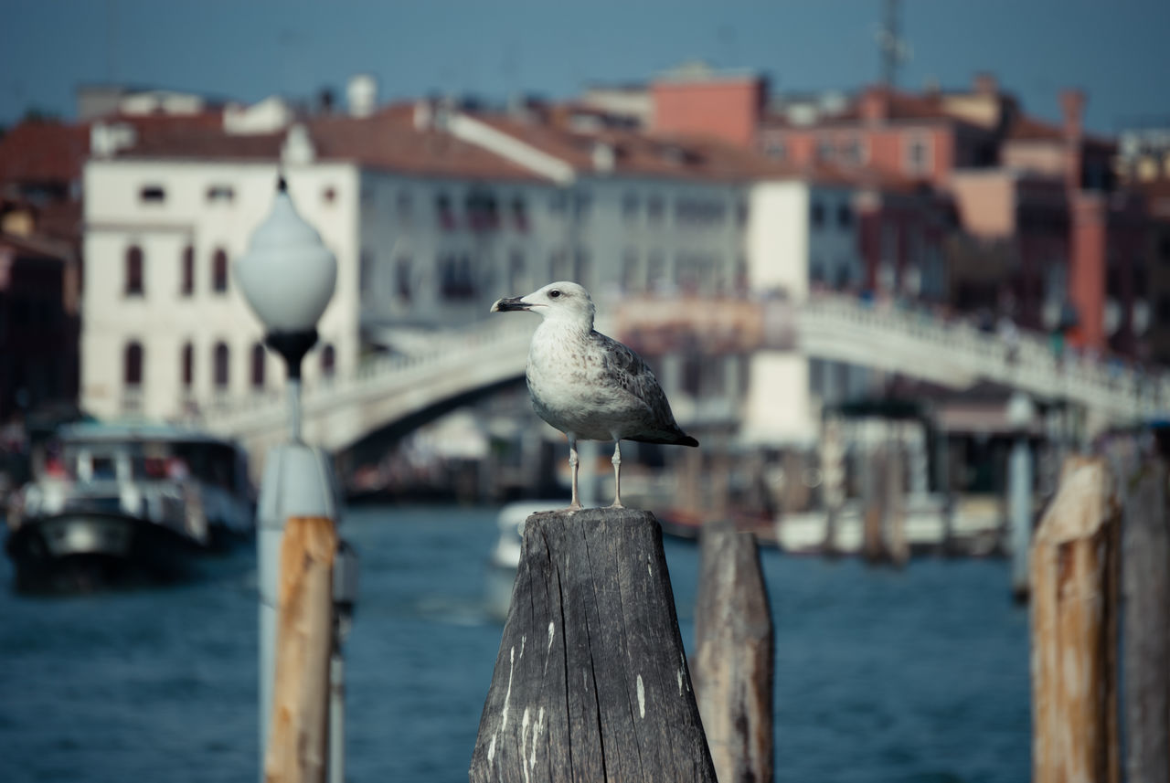"""Venedig ""Bird Animals In The Wild Wildlife Animal ThemesHello World EyeEm Best Shots Eyeem Photo Still Life First Eyeem Photo EyeEm Masterclass Battle Of The Cities EyeEm Gallery People Of The City People And Places."