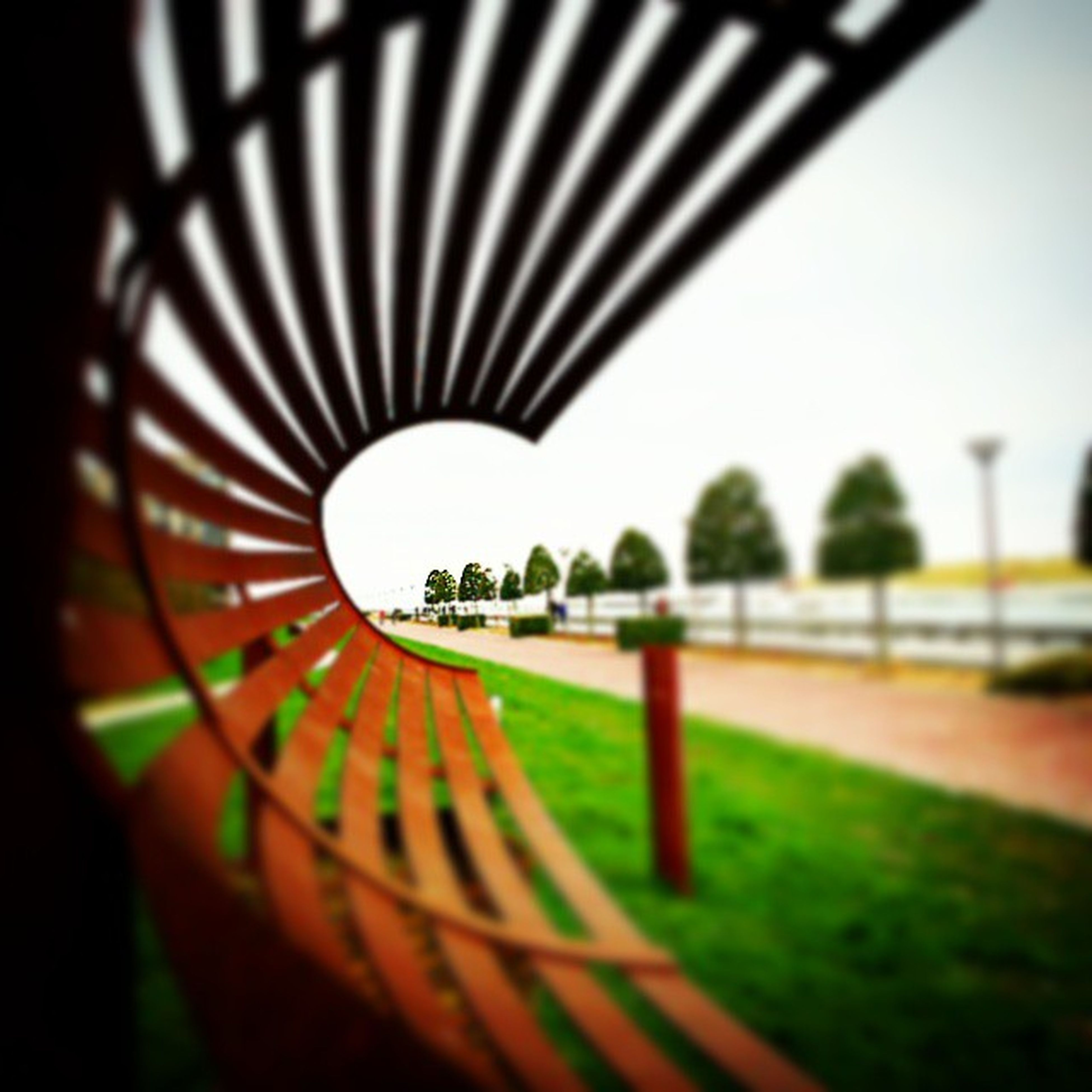 tree, railing, fence, clear sky, park - man made space, grass, metal, no people, day, sunlight, selective focus, shadow, nature, growth, outdoors, pattern, close-up, built structure, focus on foreground, sky