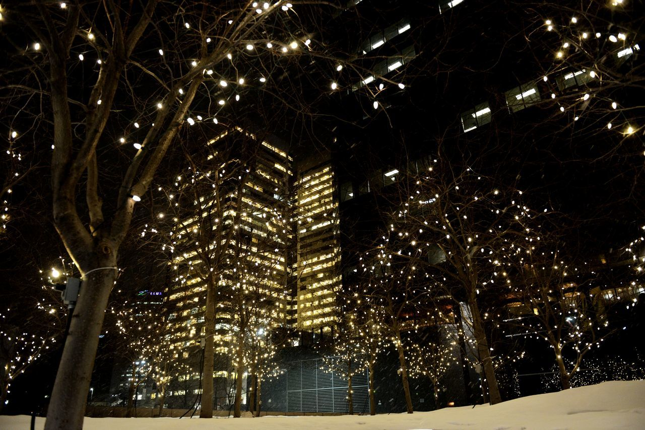 night, illuminated, tree, no people, outdoors, low angle view, christmas, christmas lights, snow, winter, architecture, building exterior, nature, city