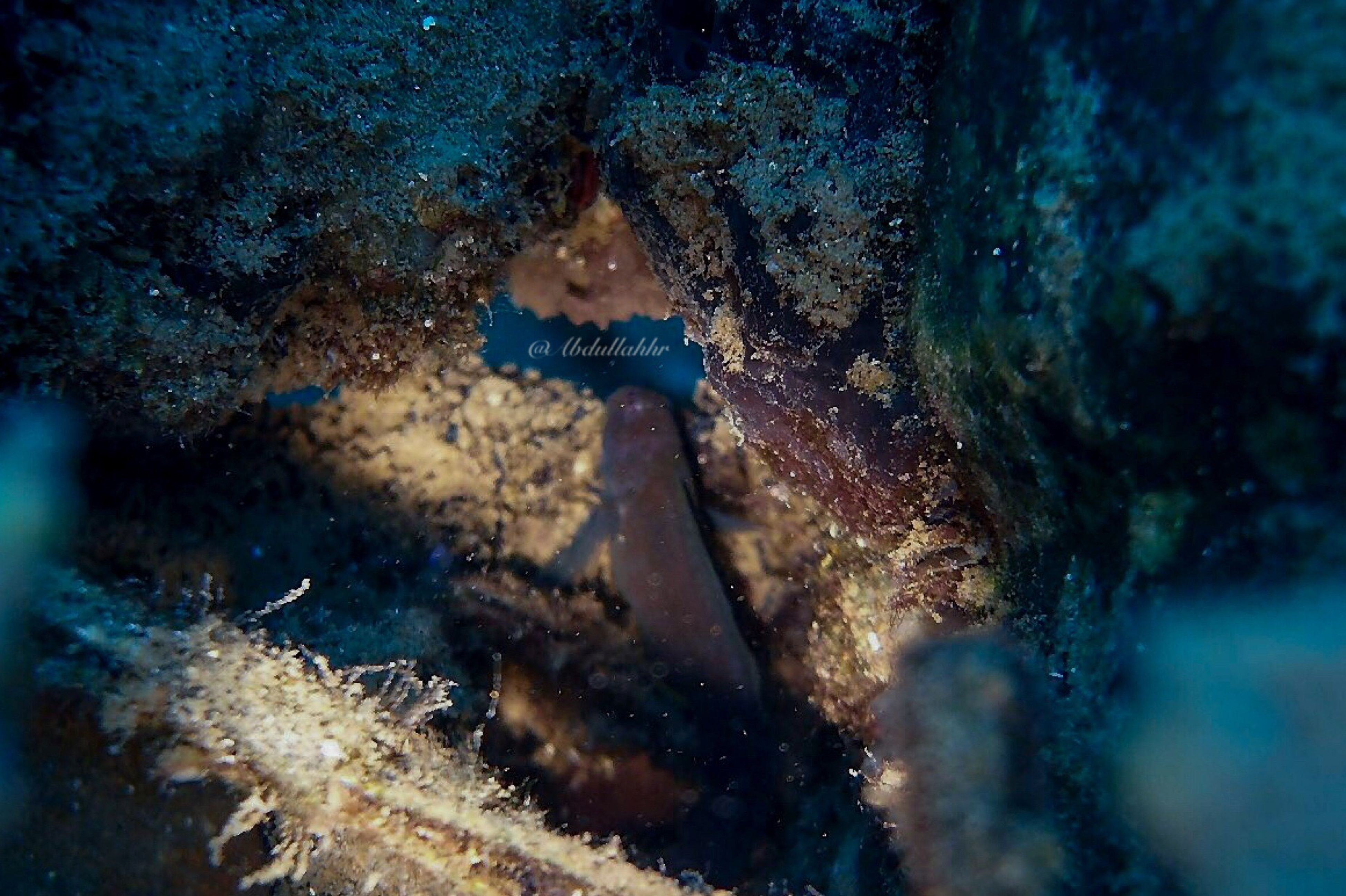 undersea, underwater, sea, coral, sea life, nature, scuba diving, one animal, water, swimming, close-up, one person, day, eyesight, outdoors, people