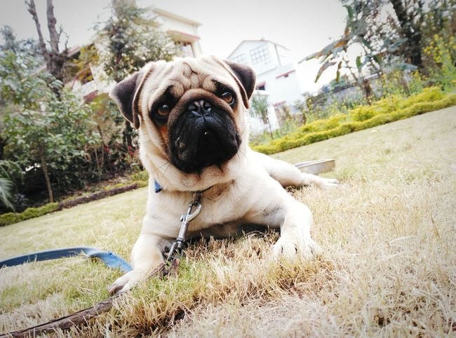 U cant just Resist this.. :) :-* First Eyeem Photo