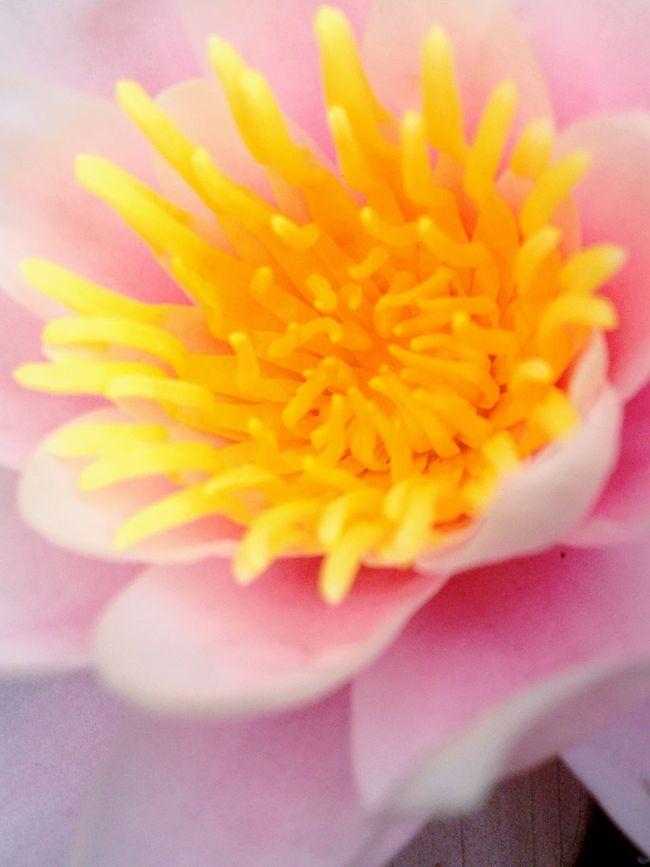 Macro Beauty EyeEmBestPics EyeEm Best Shots Eye4photography  EyeEm Nature Lover EyeEm Best Edits The EyeEm Facebook Cover Challenge Nature Showcase: January