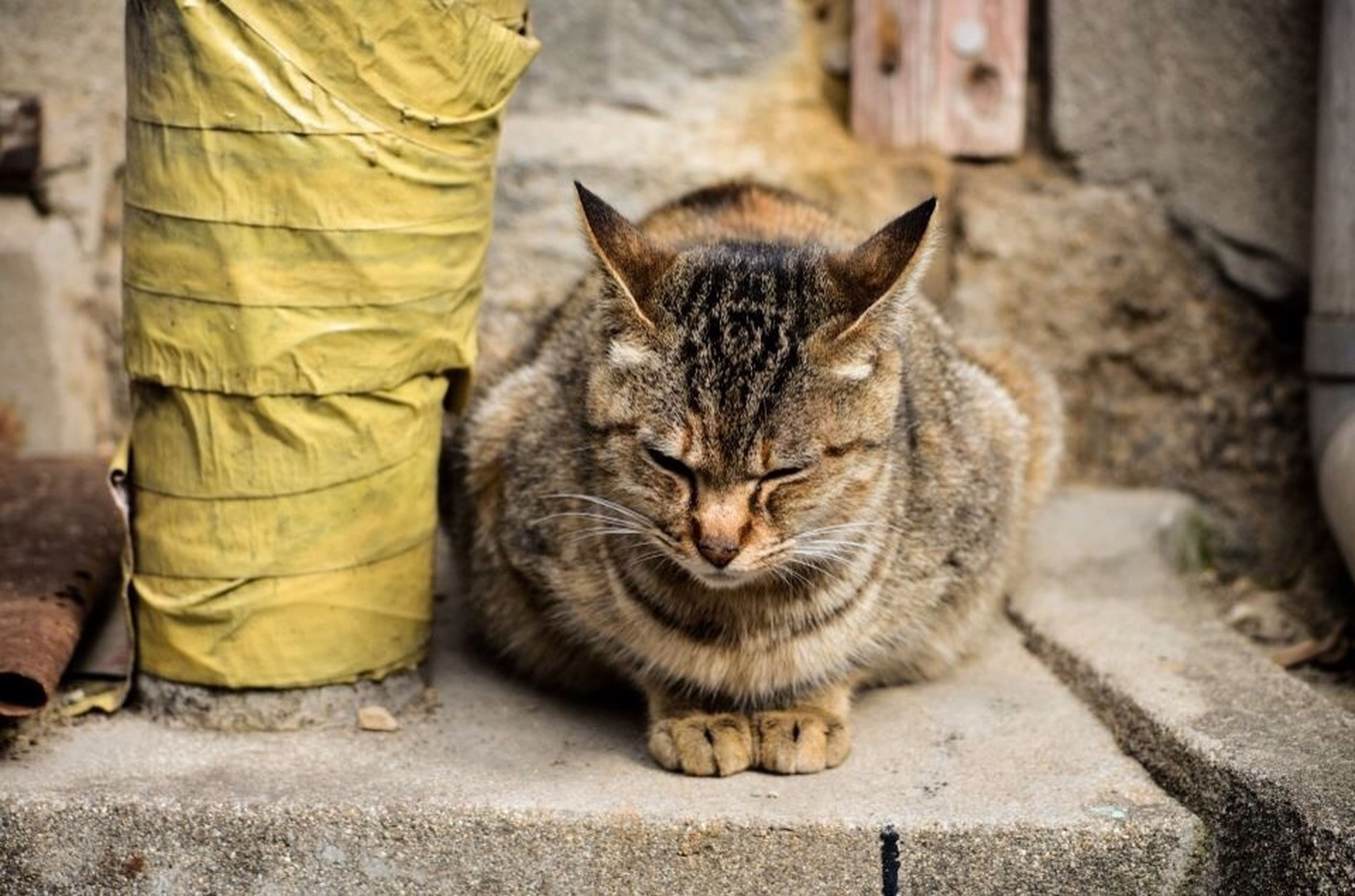 domestic cat, animal themes, domestic animals, cat, pets, one animal, mammal, feline, whisker, relaxation, street, sleeping, sitting, tabby, resting, lying down, day, outdoors