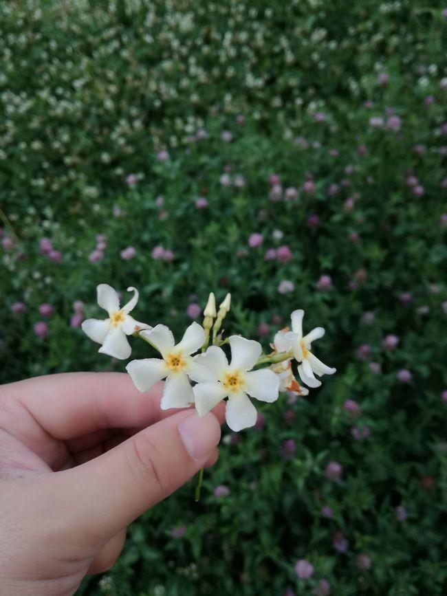 この花なんて花かな。すっごい良い香りです。 花 香り Flower Beauty In Nature EyeEm Nature Lover EyeEm Best Shots EyeEm Best Shots - Nature